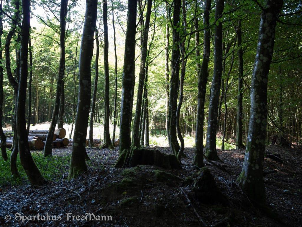 La Franc-Maçonnerie du bois par Jacques Brengues