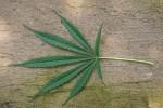 La Plante de la Gentillesse : Cannabis et Chrétienté EzoOccult