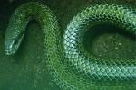 Elever le Serpent intérieur EzoOccult