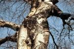 Femme arbre. Source inconnue.
